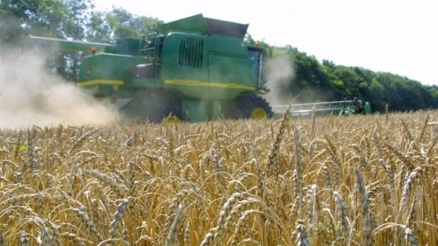Farmers have threshed 26.8 million tonnes of early wheat from 6.8 million hectares / Photo from UNIAN