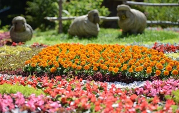 Цветы / Фото УНИАН
