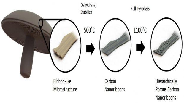 Материал, полученный из грибов, может стать основой для батарей будущего / ucrtoday.ucr.edu