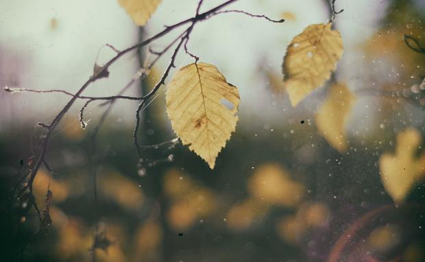 Начало недели в Украине будет без дождей и с небольшим потеплением