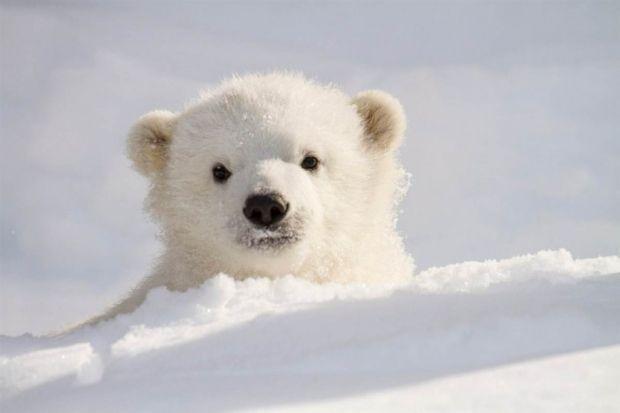 медведь / fresher.ru