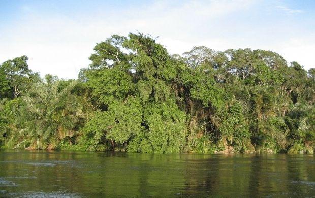тропический лес / wikipedia.org