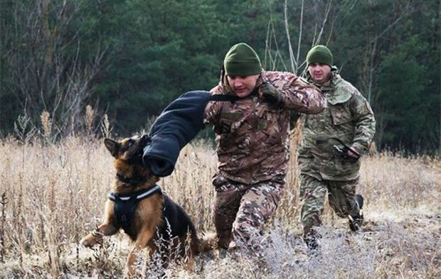 Такі засоби захисту повинні вберегти службових собак від ударів камінням і палицями / dpsu.gov.ua