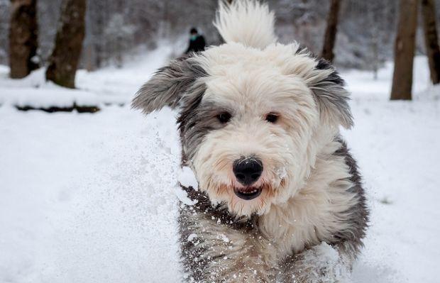 Синоптики прогнозируют снег в Киеве / flickr.com/photos/kathysunderman