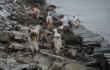 В районе разлива мазута с российского танкера на Сахалине гибнут птицы <br> Вячеслав Козлов / ecosakh.ru