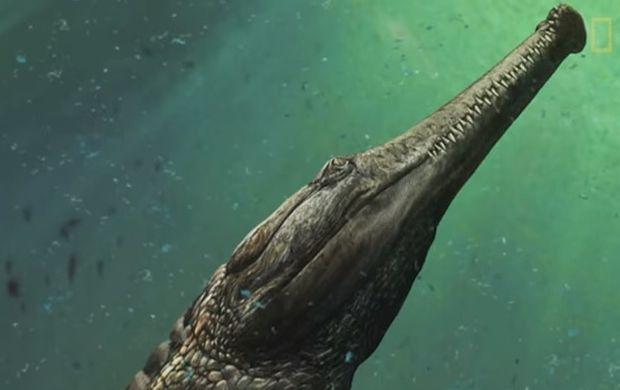 Скриншот видео / National Geographic