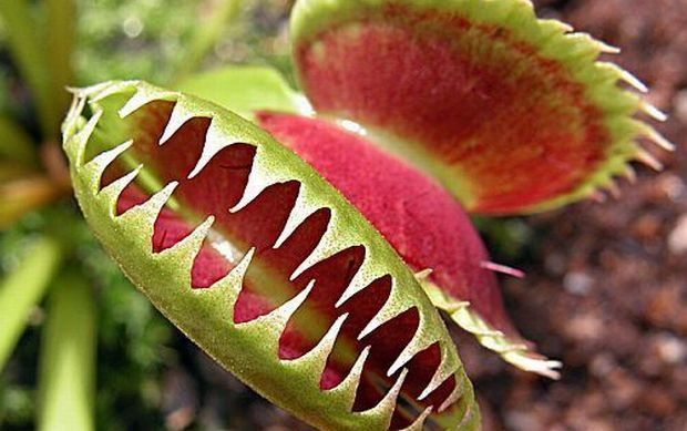 .exotic-plants.de