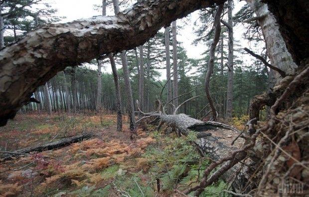 Ліс / Фото УНІАН
