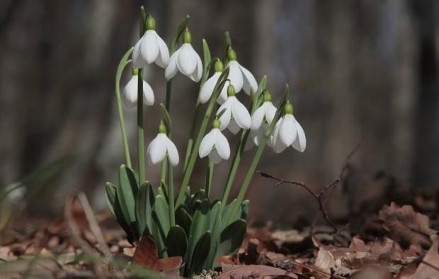В Украину пришла весна / Фото УНИАН