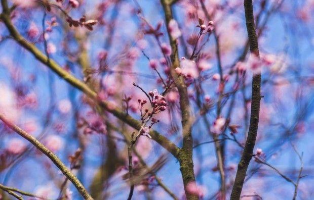 Весна / kaboompics.com