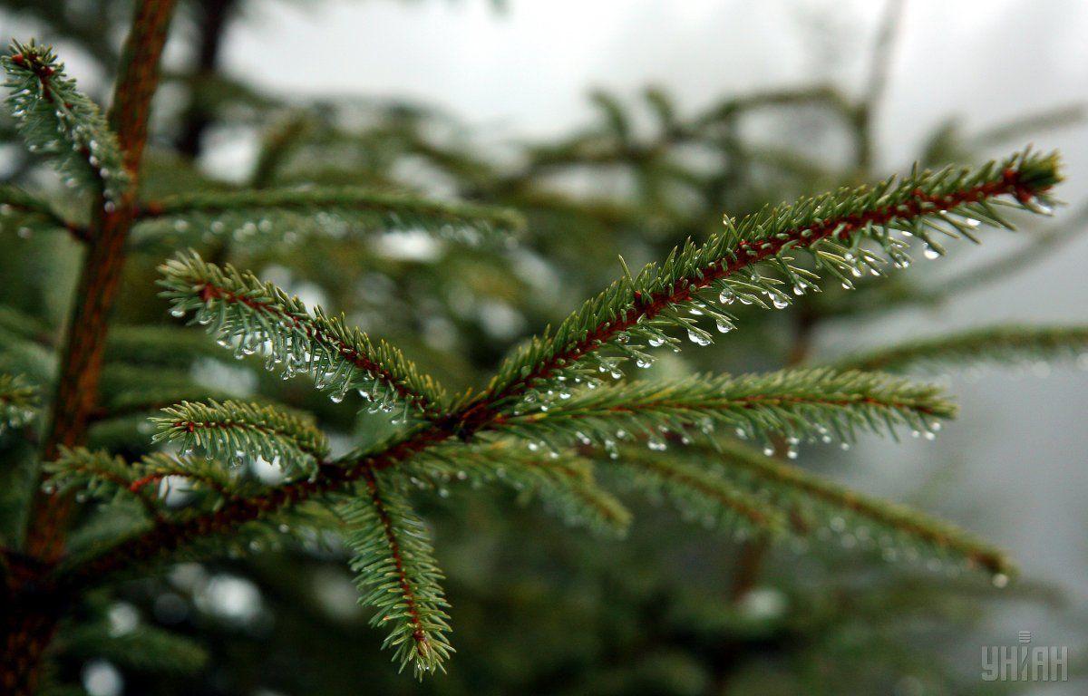 Дождь / Фото УНИАН