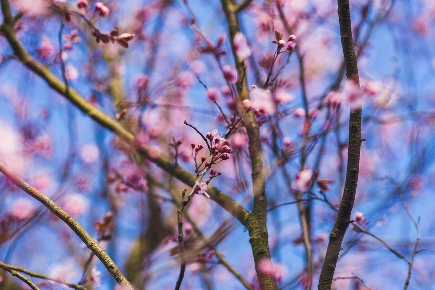 В Украине - настоящая весна / kaboompics.com