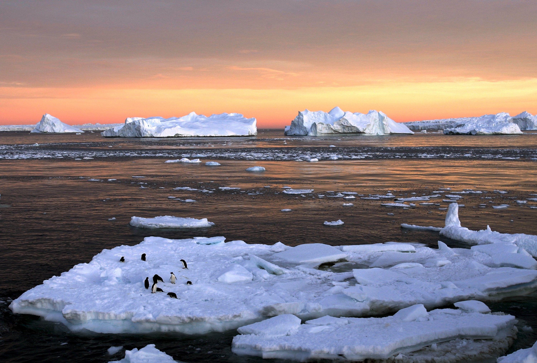 Пингвины Антарктики / Фото REUTERS
