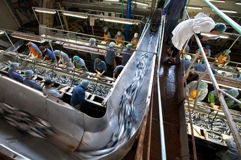 Нынешний директор рыбокомбината сослался на неудачный сезон рыбной ловли / Фото sakhfoto.livejournal.com