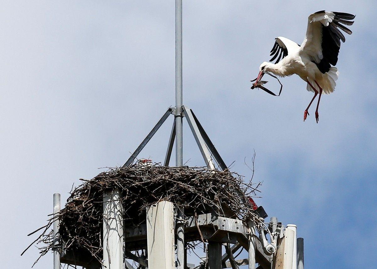 Аист строит гнездо на телефонной вышке в Испании / REUTERS