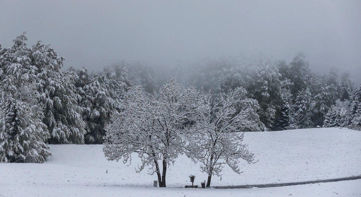 Заснеженные деревья в австрийском Гнаденвальде / REUTERS