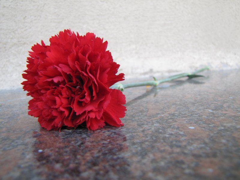 гвоздика / Фото з відкритих джерел