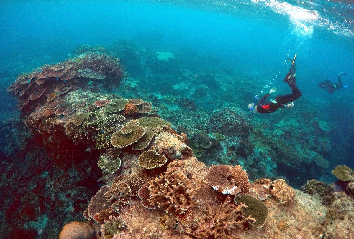 Из-за глобального потепления массово гибнут кораллы Большого барьерного рифа