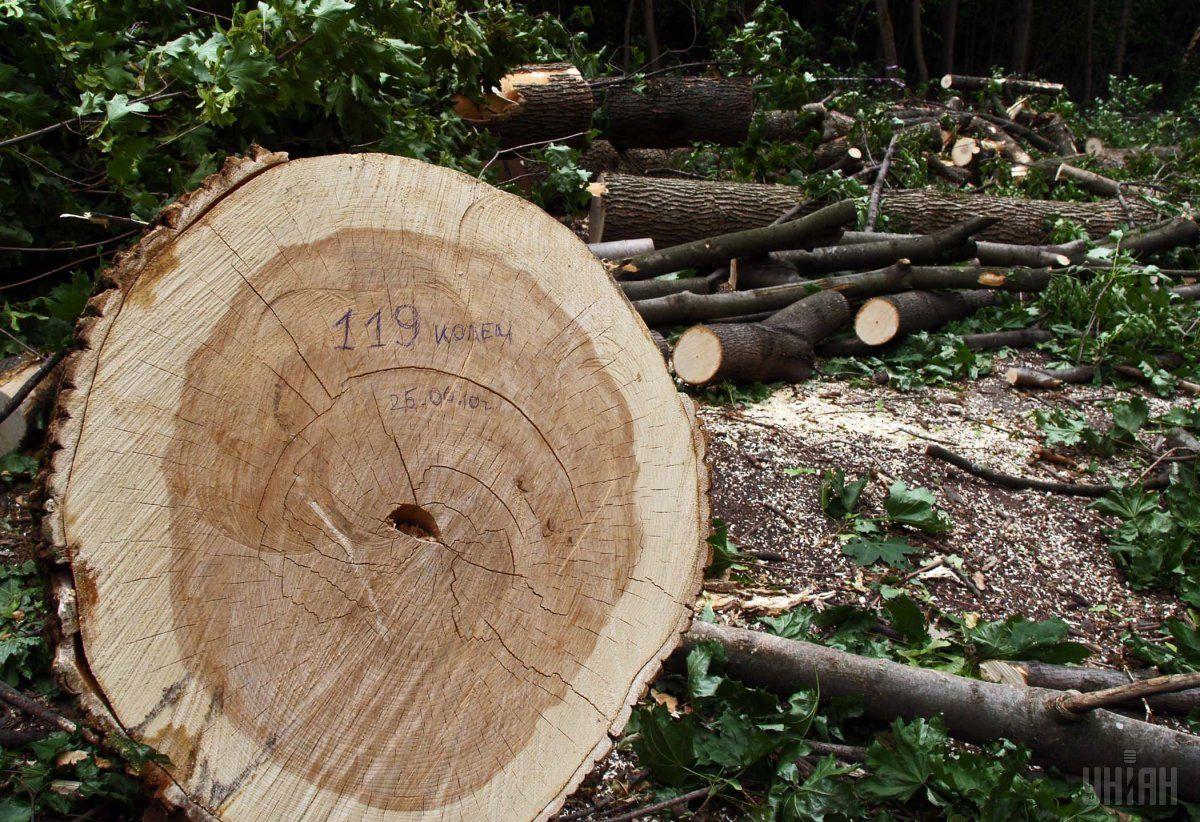 Комісія перевірятиме факти незаконних рубок дерев, виявлені в результаті аналізу інтерактивної карти українських лісів / Фото УНІАН