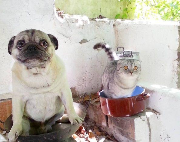 мопс / instagram.com/pugandcat