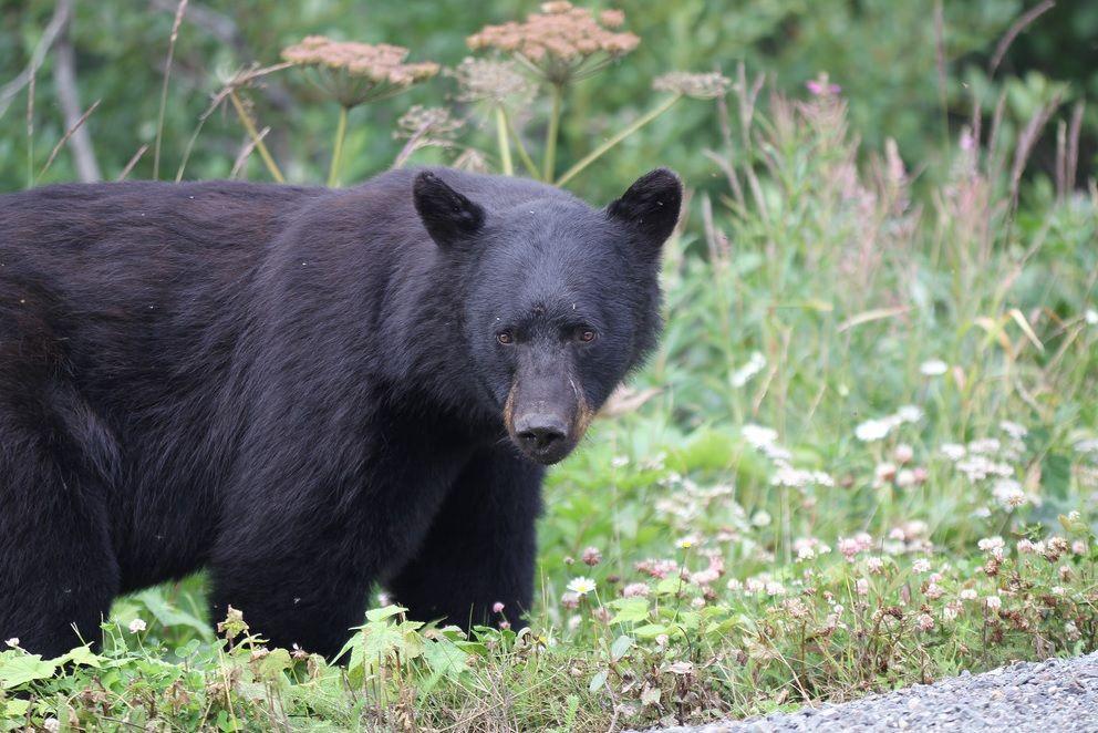 Пропустив удар в морду, медведица ретировалась / Coco272727 via Flickr