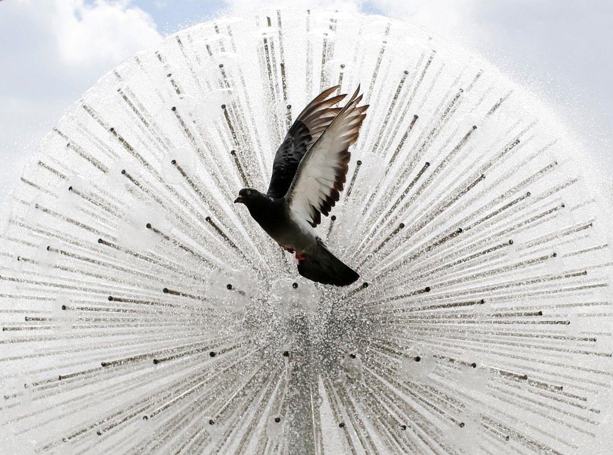 Дівчина годувала голубів у парку картоплею фрі, яку купила в місцевому mcdonald's під час обідньої перерви / REUTERS