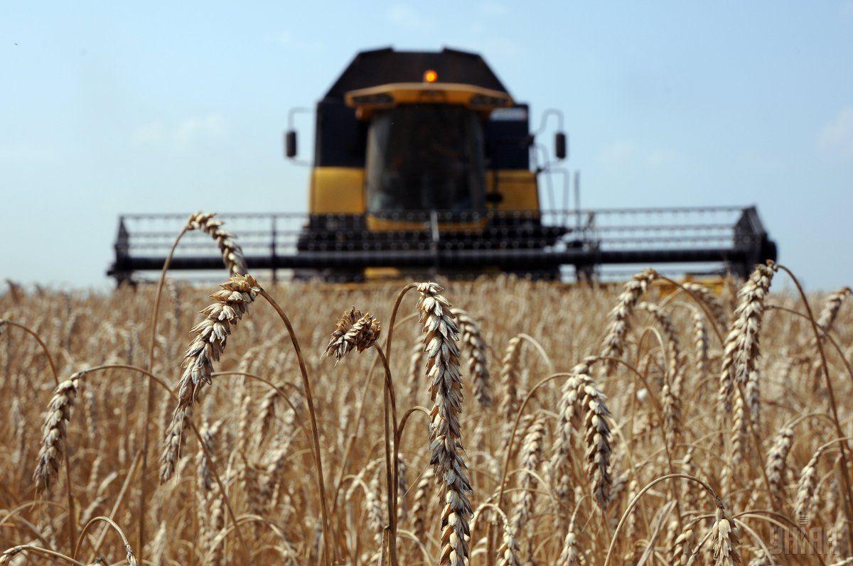 Валовый сбор зерновых вКазахстане превысит 22 млн тонн