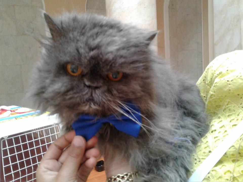 самый старый кот / facebook.com
