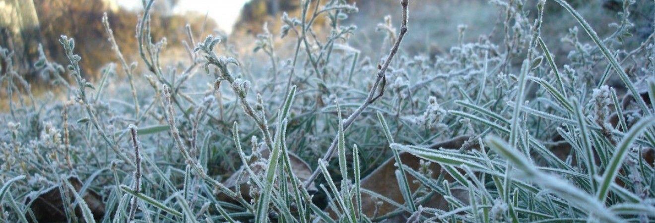 В Киеве зафиксировали первые морозы