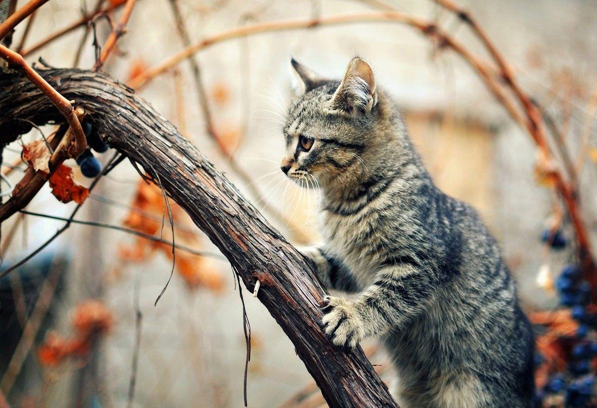 В Одессе спасителя кошки с дерева снимали пожарные / getbg.net