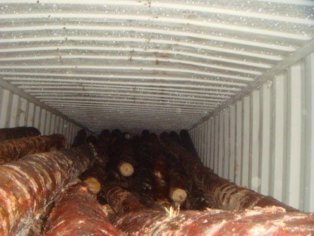 Изодесского порта пытались вывезти древесины на10 млн грн