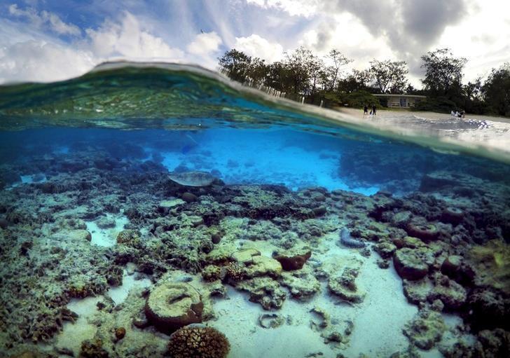 Необычайного моллюска-хамелеона назвали вчесть Дэвида Боуи