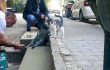 Памятник коту, ставшему интернет-мемом <br> instagram.com/thegeyik