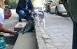 Пам'ятник коту, який став інтернет-мемом <br> instagram.com/thegeyik