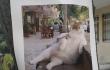 Сообщение о смерти кота 1 августа <br> dailysabah.com