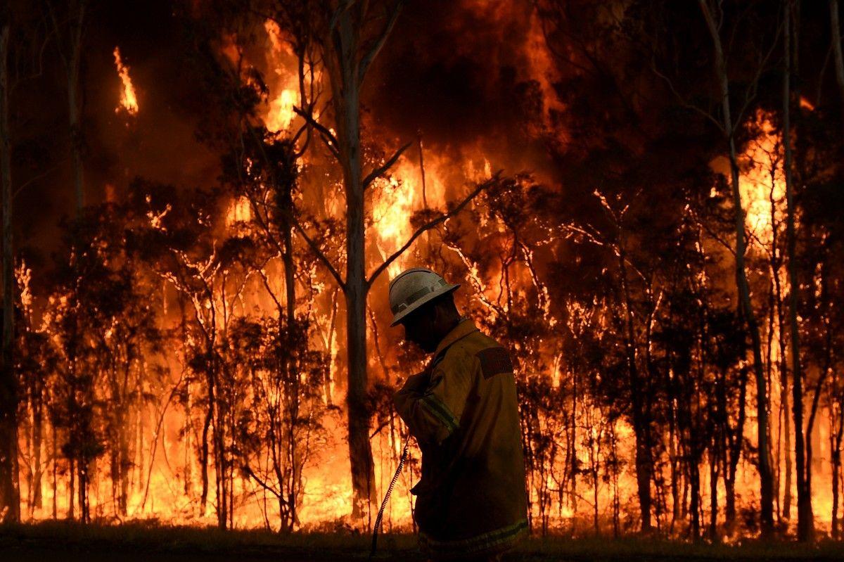 Пожежа в лісі / Reuters