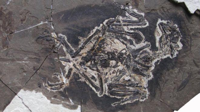 Ученые: установлен цвет птиц, живших вэпоху динозавров