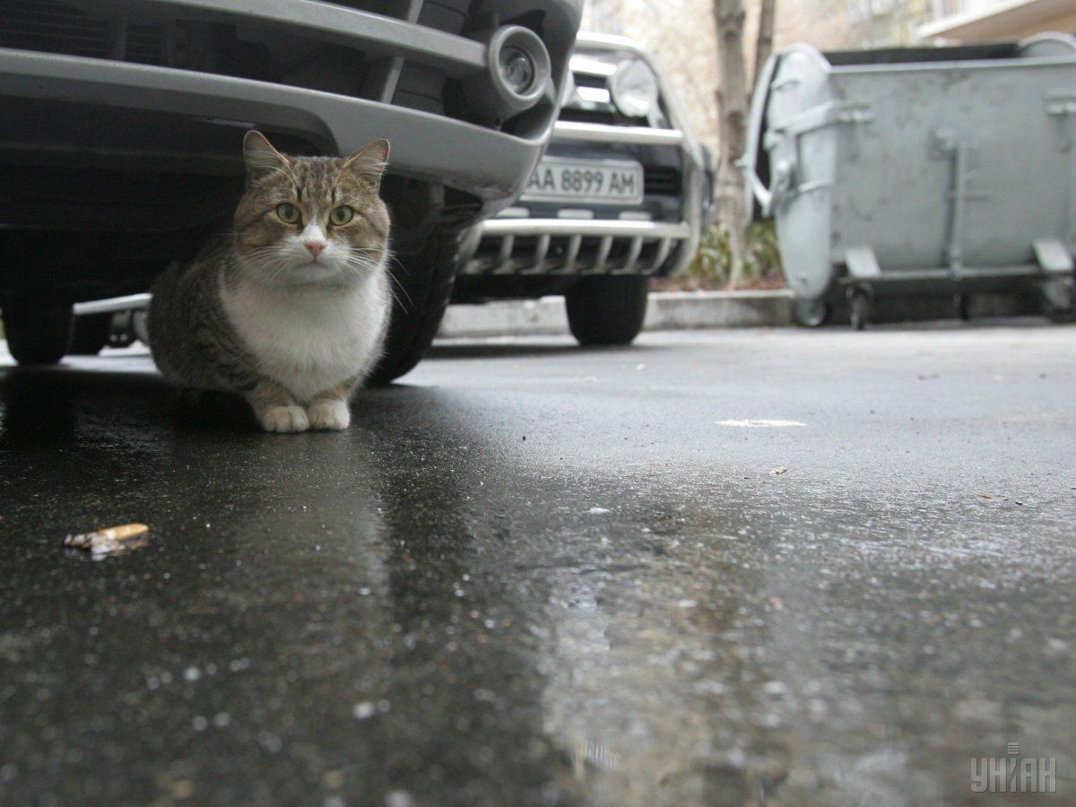Бездомных кошек в Киеве нужно спасать / УНИАН