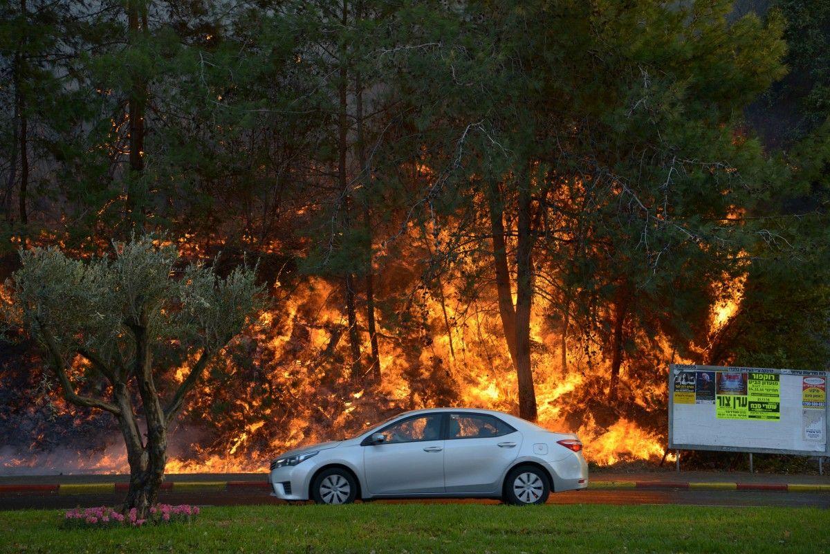 Пожар в израиле / REUTERS
