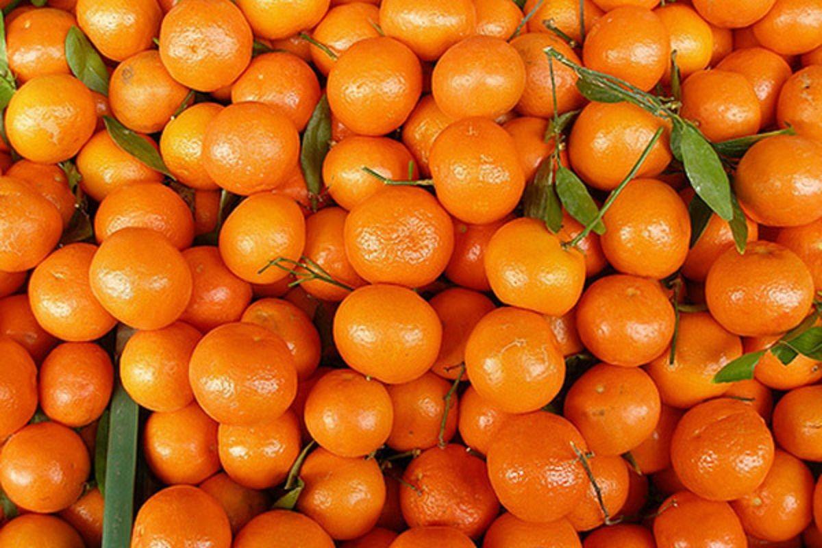 В Украинское государство пытались ввезти сотни тонн зараженных мандаринов