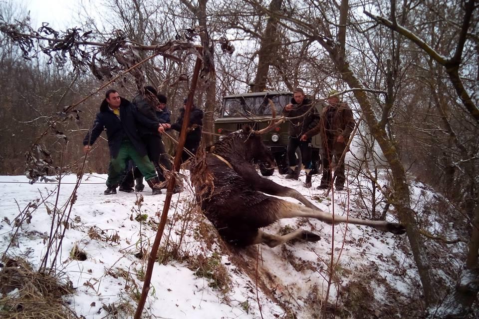 НаХарьковщине спасли лося, который немог выбраться изледяной реки