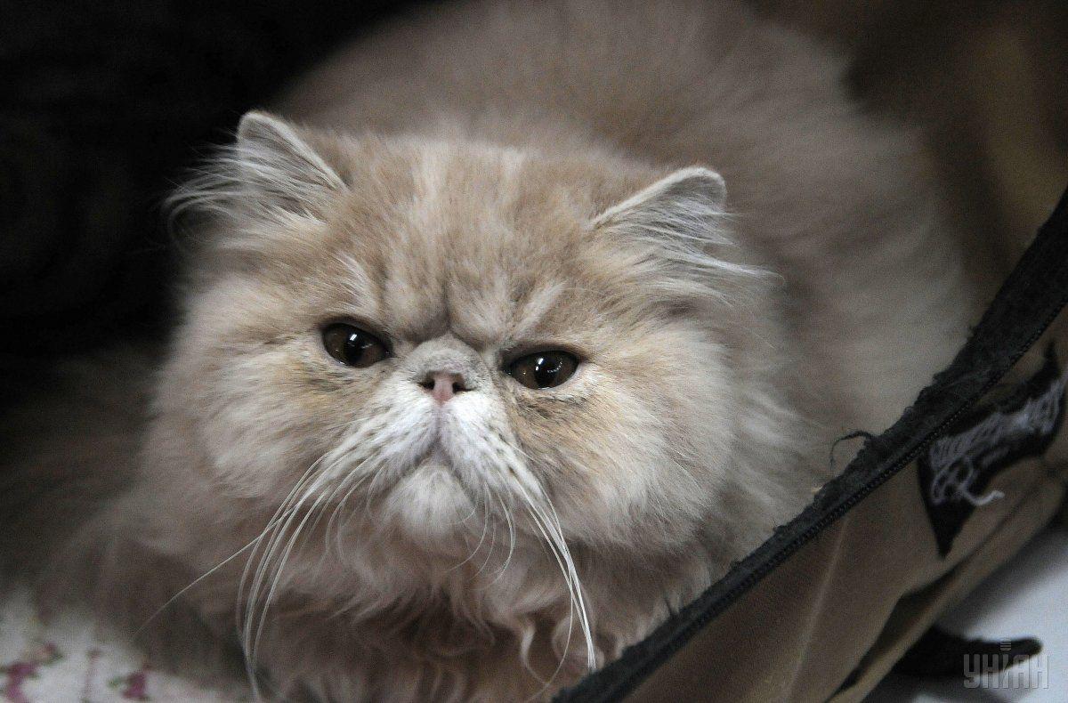 ВДнепровском районе столицы ввели карантин из-за бешенства кошки