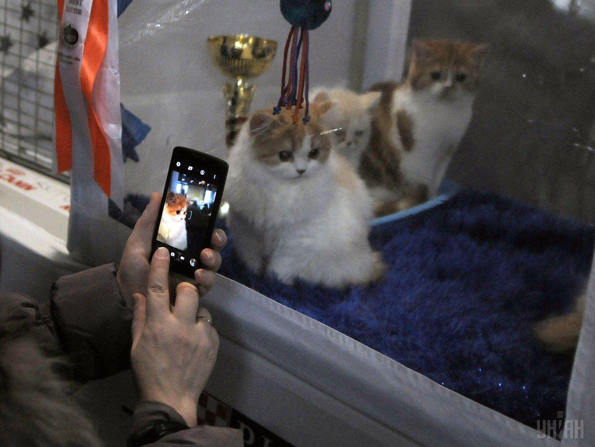 Породисті коти продемонстрували свою красу / Фото УНІАН