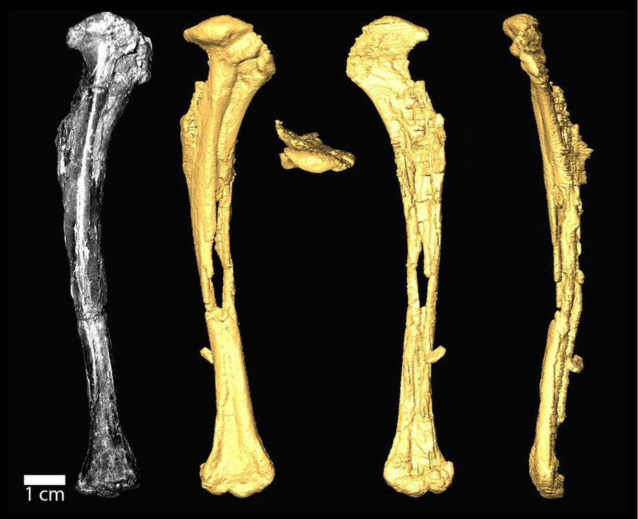 Ученые обнаружили останки неведомой птицы возрастом 90 млн. лет