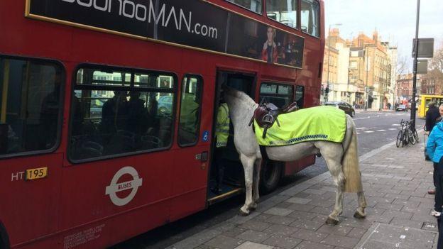 У Лондоні кінь спробував сісти в автобус