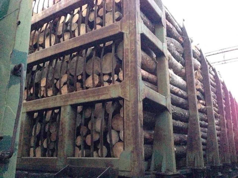 ВОдесской области правоохранители предупредили нелегальный вывоз древесины железной дорогой