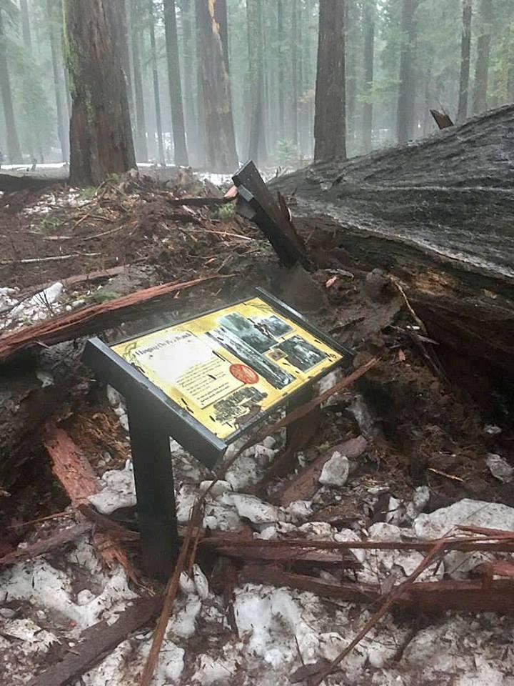 Фото facebook.com/pages/Calaveras-Big-Trees-State-Park