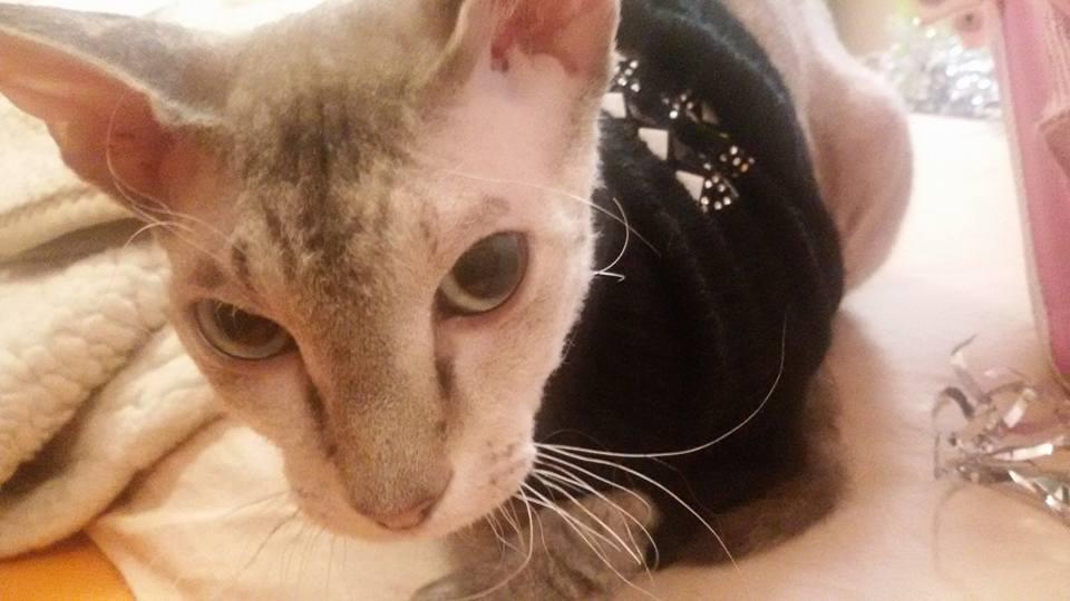 кошка в шкафу фото