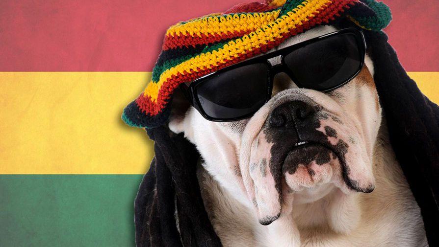 Ученые узнали, что собаки предпочитают регги исофт-рок