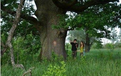 Представник Всесвітнього фонду дикої природи (WWF) в Україні Андрій Плига: Майже кожна офіційна рубка лісу насправді порушує закон title=